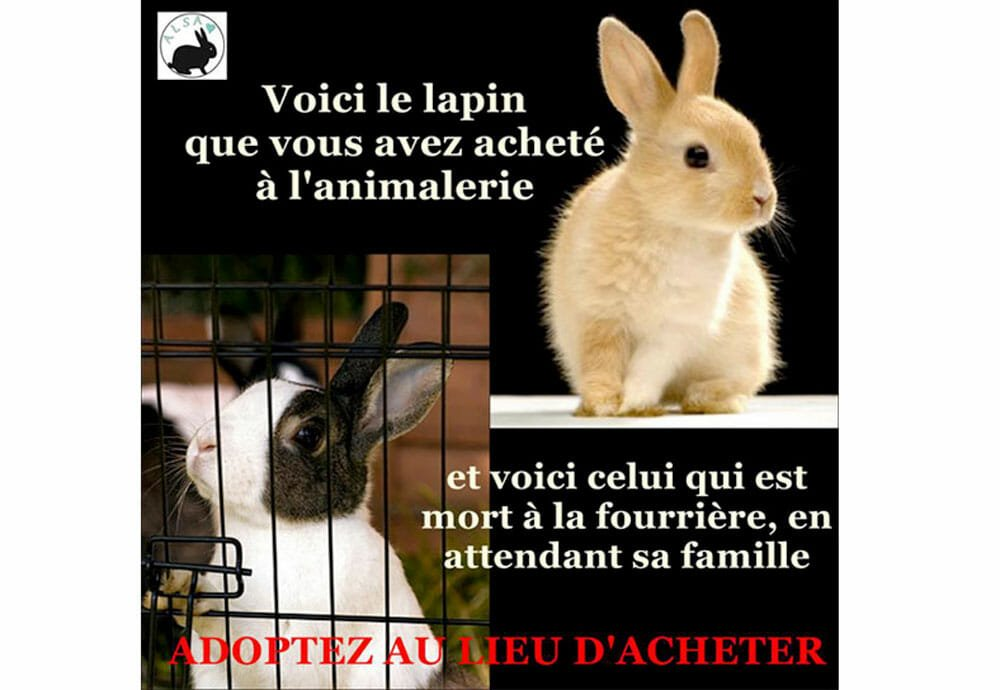 Liste des associations de protection des lapins