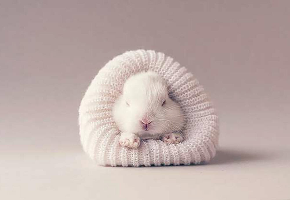 Ashraful Arefin, la tendresse incarnée dans ses photos de lapins