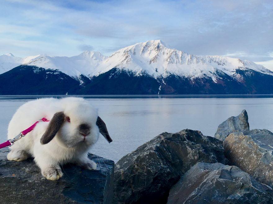 Partir en trek avec son lapin