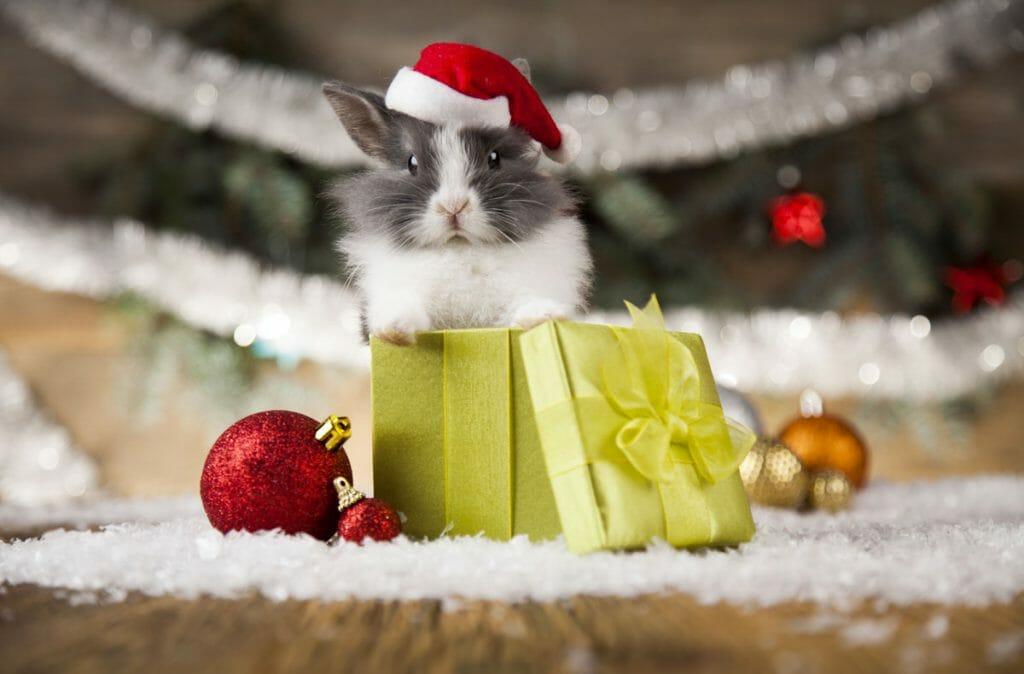 10 idées de cadeaux pour faire plaisir à son lapin pour Noël