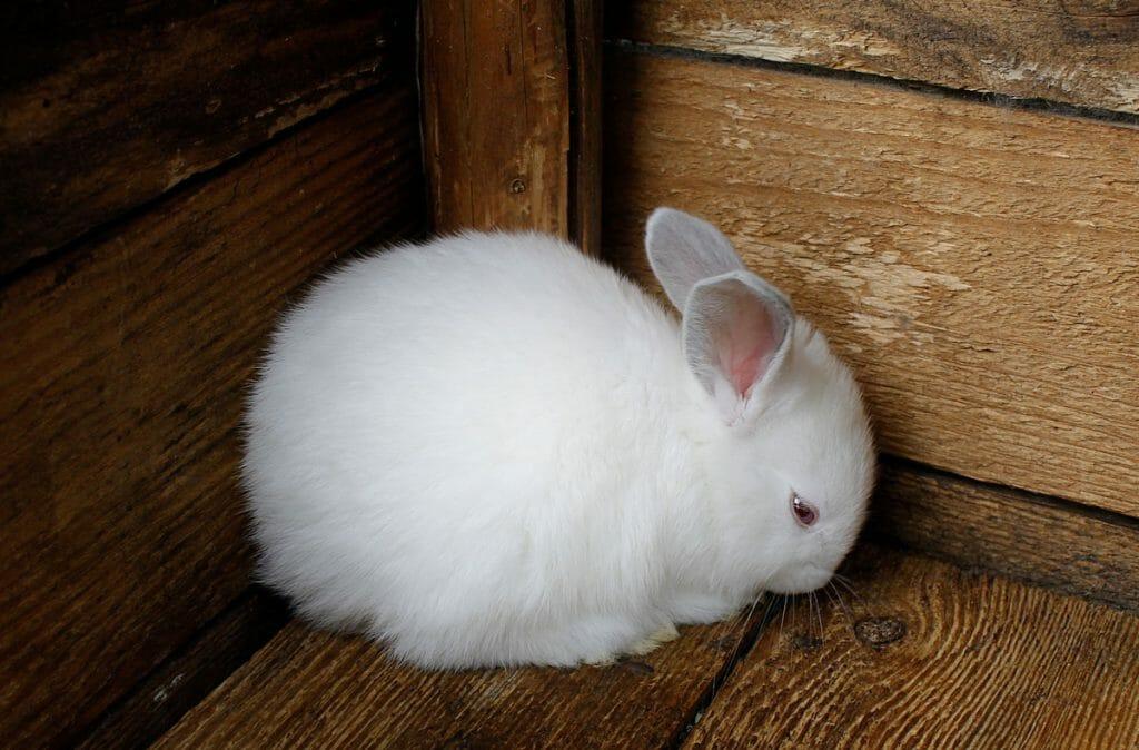 Acheter ou adopter un lapin ?