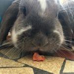 Les chips de carottes séchées photo review