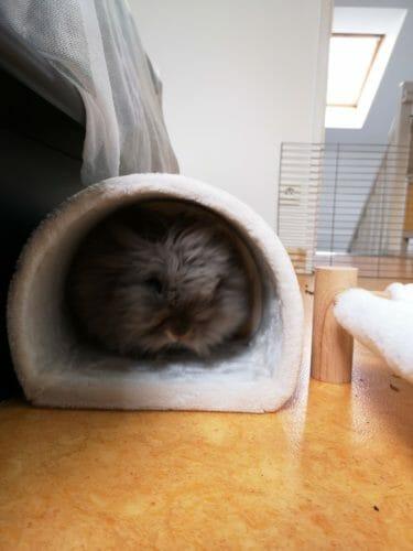 Le tunnel douillet photo review
