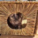 La cabane XL en fibres naturelles photo review