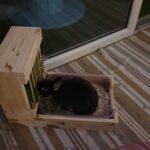 Litiere-râtelier small pastel photo review