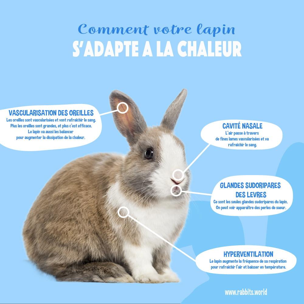 Nos conseils pour protéger le lapin de la chaleur