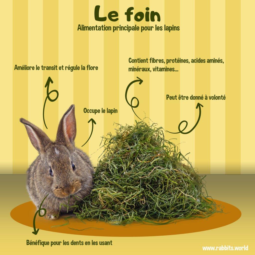 Les avantages du foin pour le lapin