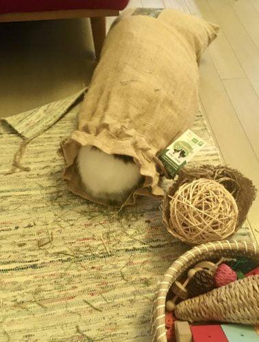 Foin de Normandie bio 1,5kg sac en jute photo review