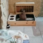 Râtelier-litière avec écuelles photo review