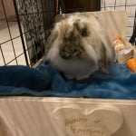 Lit en bois Bunny Nature photo review